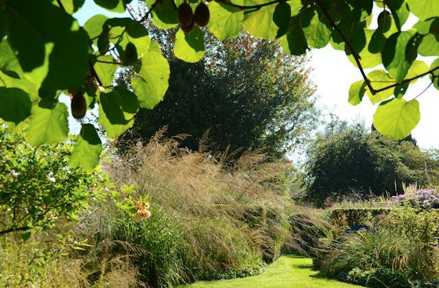 Les graminées font le lien entre les vivaces dans le jardin de Marie Ange