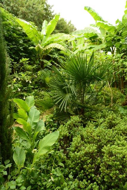 La végétation luxuriante du jardin exotique