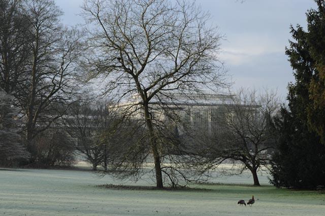 Dépouillés de leurs feuilles, les arbres laissent voir leur silhouette majestueuse au jardin botanique de Meise (Belgique).