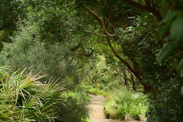 Au domaine du Rayol, jardin des Méditerranées, la végétation exotique se développe avec naturel et vigueur.