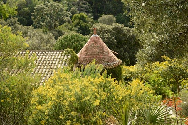 Au domaine du Rayol, jardin des Méditerranées, le jardin d'Australie où les mimosas ont la vedette.