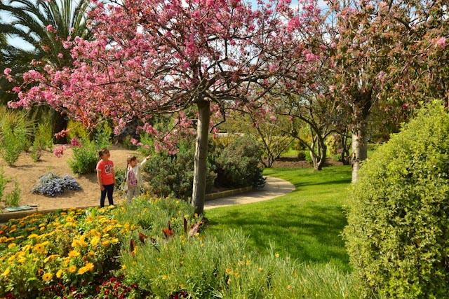 arbre à fleurs roses dans les allées du parc Phoenix