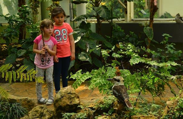 Dans la serre aux oiseaux, deux fillettes observes-nt un oiseau perché sur une branche.