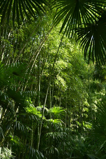 Un mélange de palmes de palmiers de Chine et de cannes de bambous géants en camaïeu de verts.