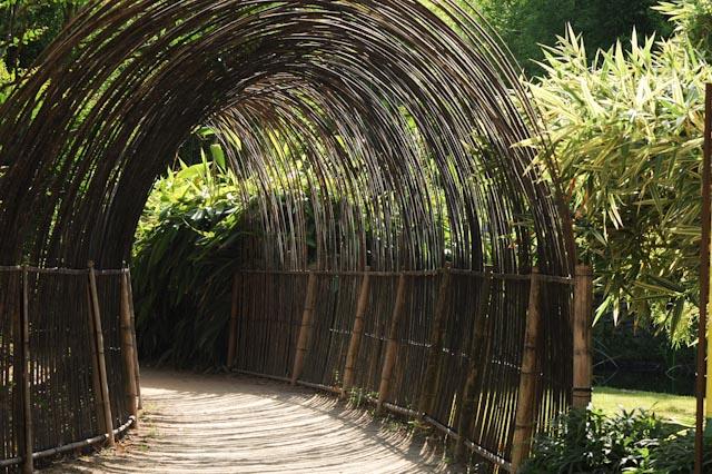 Tunnel de bambous, entrée du Bambusarium qui présente la collection de bambous de la Bambouseraie en Cévennes
