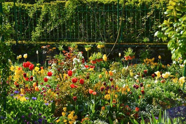 Fritillaires impériales, tulipes simples ou doubles et pensées dans le jardin de Monet à Giverny.