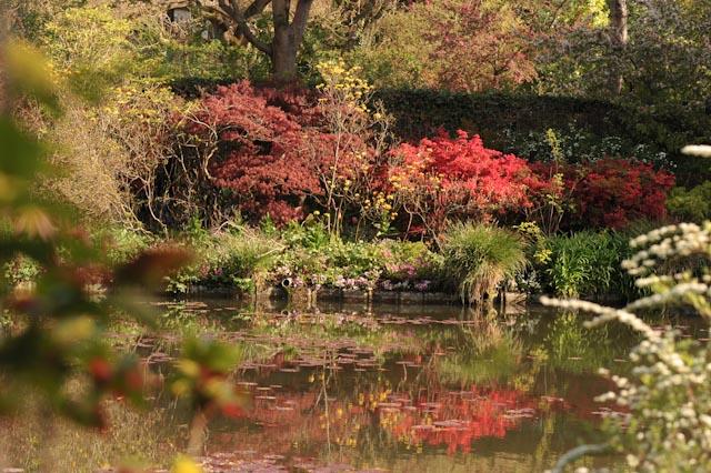 Erables japonais et azalées donnent de la couleur au jardin d'eau au début du printemps, dans les jardins de Monet à Giverny.