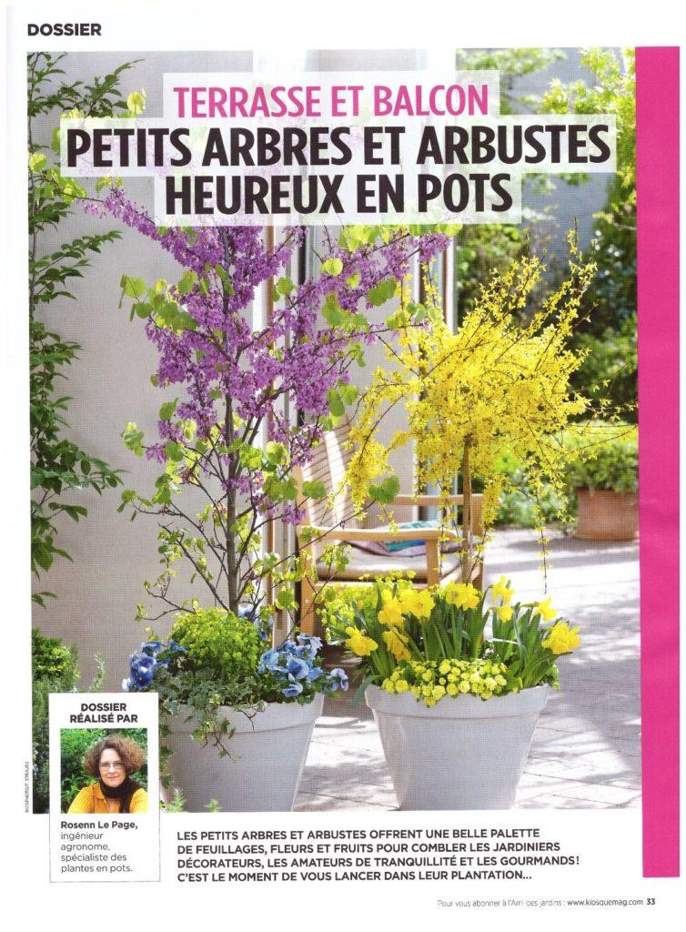Une du dossier de l'Ami des jardins sur les arbustes en pot. des arbustes fleuris (arbre de Judée et forsythias) en pot avec des fleurs printanières à leur base sur une terrasse.