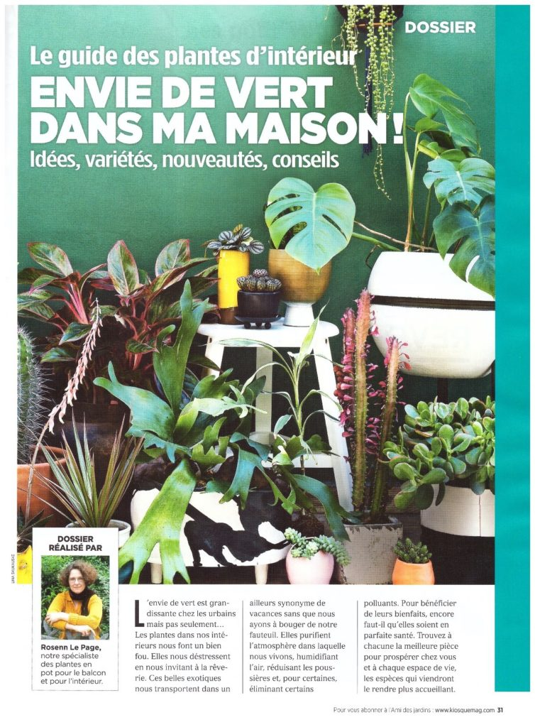 Une du dossier de l'ami des jardins sur les plantes d'intérieur dans la déco.  des plantes d'intérieur rassemblées devant un fond vert.