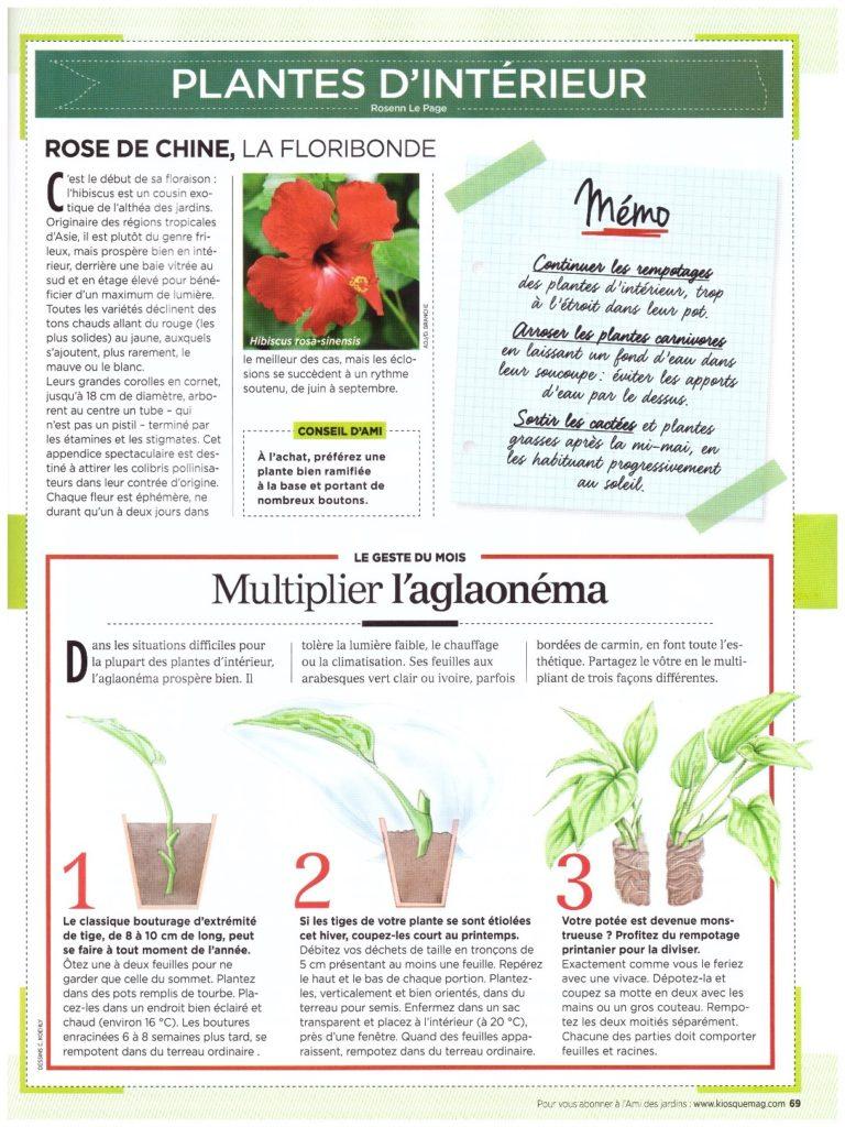 Exemple de page sur les plantes d'intérieur du cahier du jardinier de l'Ami des jardins.