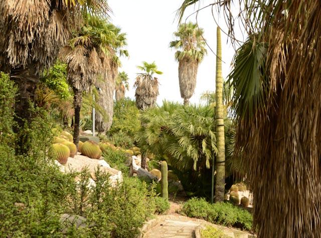 une allée en perspective, bordée de palmiers et de cactus.