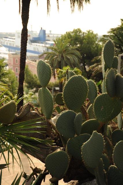 Au premier un ensemble de cactus raquette ou opuntia. a l'arrière plan, le port de Barcelone et un gros paquebot.