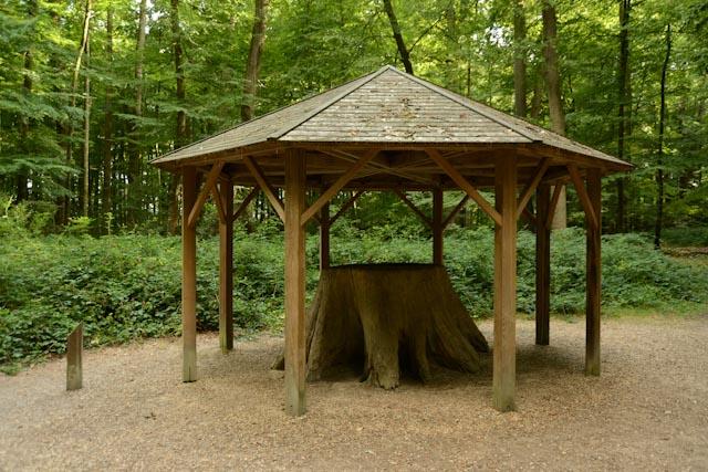 la souche du premier chêne Boppe sous son kiosque de bois.